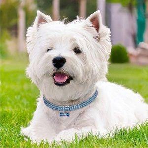 Jewelry - NEW. S/M/L 🎉FINAL PRIVE🎉blue dog collar💕